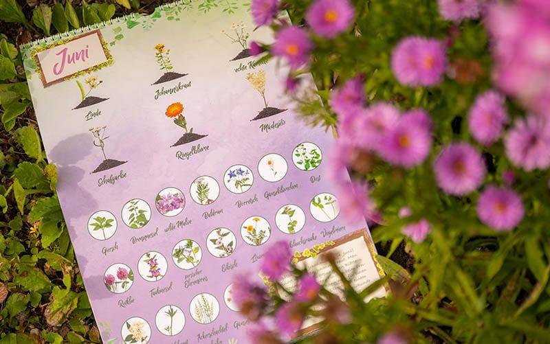 Saisonkalender für Wildkräuter